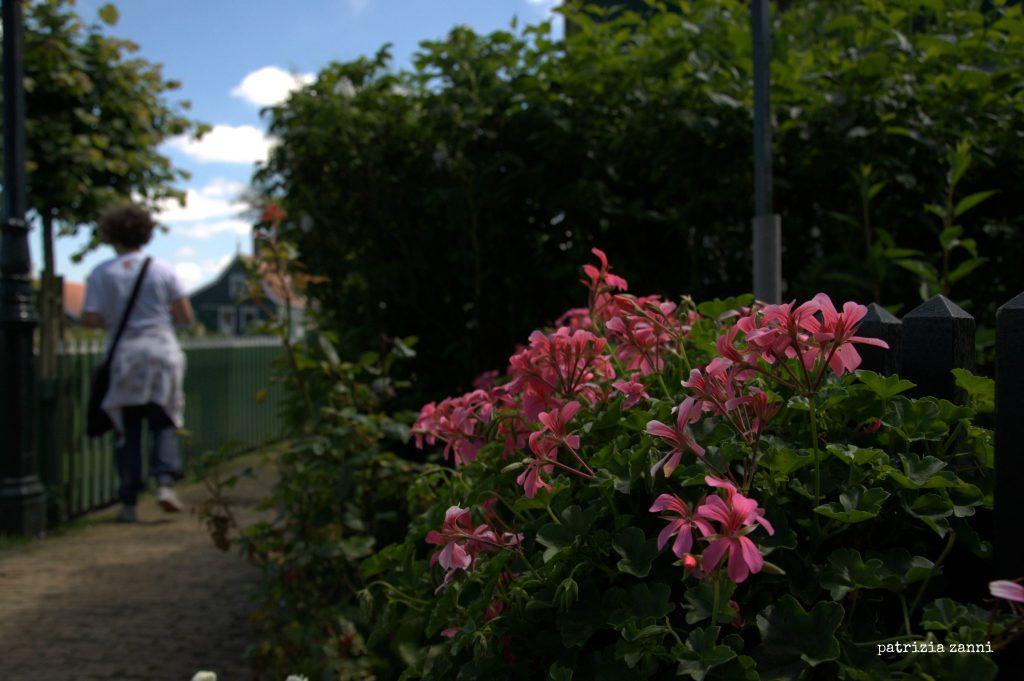 zaandam-fiori